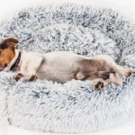 Best Calming Dog Beds 2021 (Reviews and Buyer Guides)