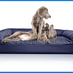 Best Great Dane Dog Beds Reviews 2020