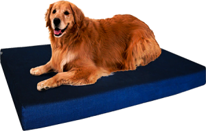 Memory Foam Dog Bed, Pressure for Large Breed