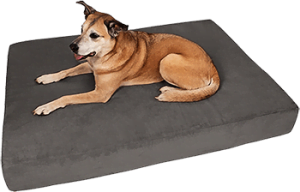 Big Barker Pillow Top