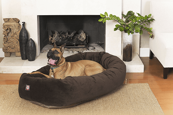 Best Dog Bed to Buy