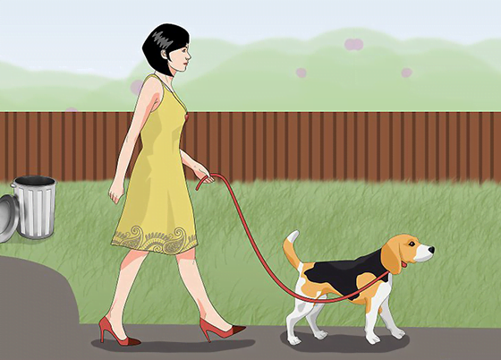 How To Help A Dog With Separation Anxiety Take Walk Daily