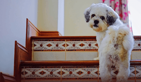 Run Your Dog Up and Down the Stairs