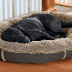 Best Washable Dog Beds - Latest Reviews and Buyer's Guides