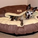 Best Dog Bed For Whippets 2021 (Reviews & Buyers Guide)