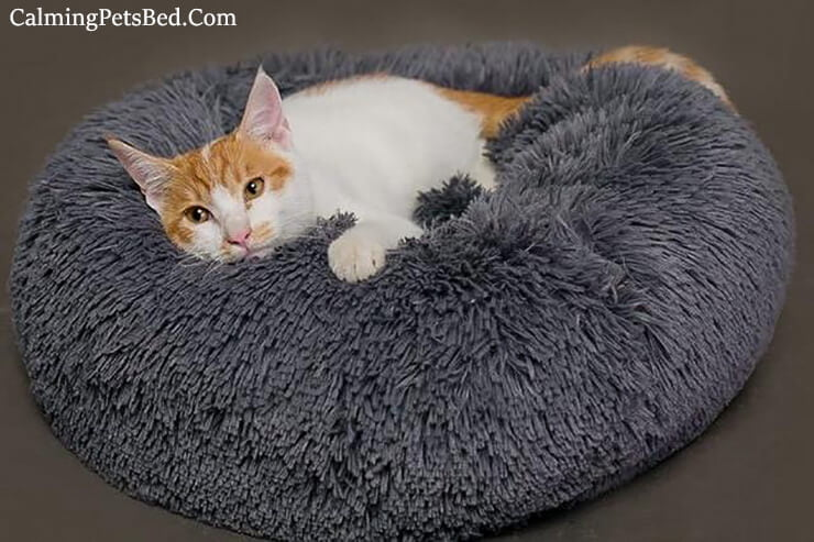 best calming cat bed