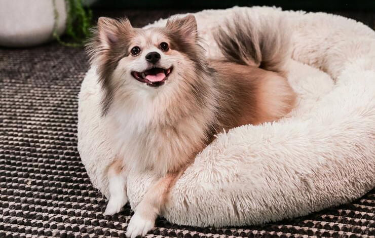 best calming dog bed 2021
