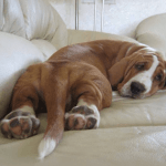 Best Dog Bed For Basset Hound 2021 - Review Before You Buy