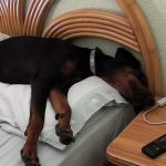 Best Dog Bed For Doberman (Latest Reviews 2021)