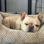 Best Dog Bed For French Bulldog 2021 (Latest Reviews & Buyer Guide)