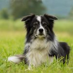 Best Dog Bed for Border Collie 2021- Latest Reviews & Buying Guide