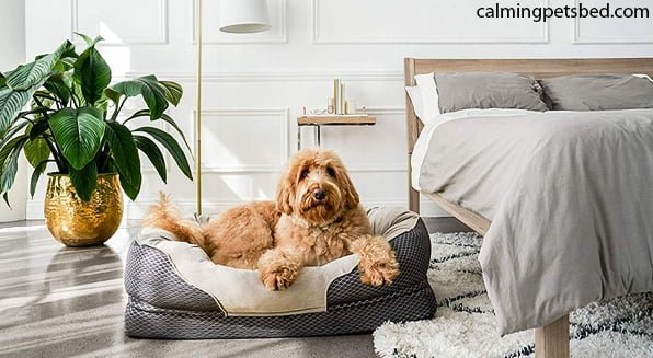How often should you replace dog beds