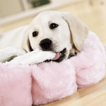 How to stop my dog from chewing his bed (Pro Tips)