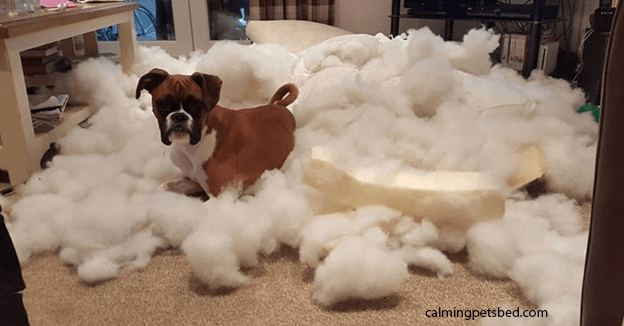 How to stop my dog from chewing his bed