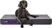 Purple The Pet Bed Large