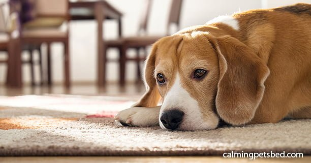Tips for Helping your Arthritic Dog