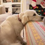 Tips for Helping your Arthritic Dog in 2021 (Maintain an Active Lifestyle)